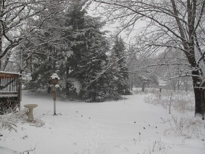 View of the backyard during the snow storm